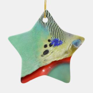 Parakeet que mira en espejo adorno de cerámica en forma de estrella