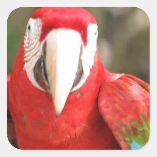 Parakeet Square Sticker