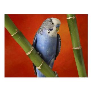 parakeet postal