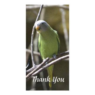 Parakeet Thank You Photo Card