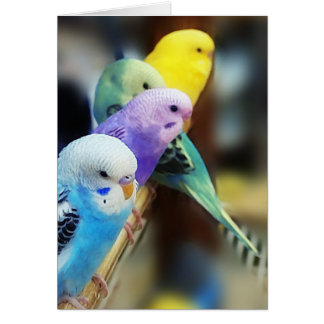 Parakeets Greeting Card