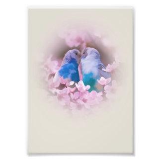 Parakeets cariñosos y flores rosadas cojinete