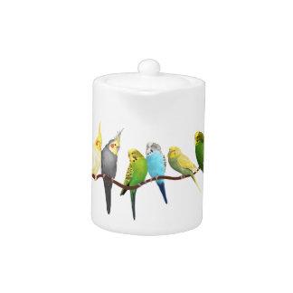 Parakeets & Cockatiels! Teapot