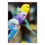 Parakeets Felicitaciones