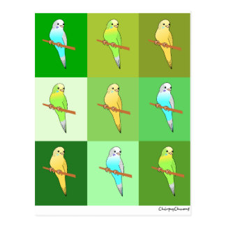 Parakeets in Green Squares Post Cards