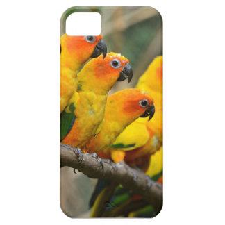 parakeets iPhone SE/5/5s case