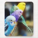 Parakeets mousepad mousepads