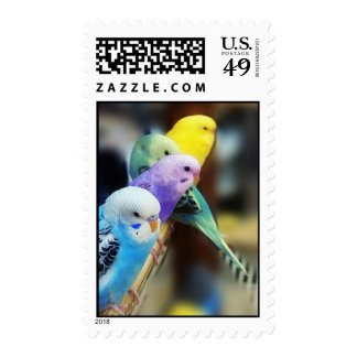 Parakeets Postage Stamp