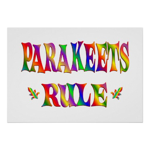 PARAKEETS RULE POSTER