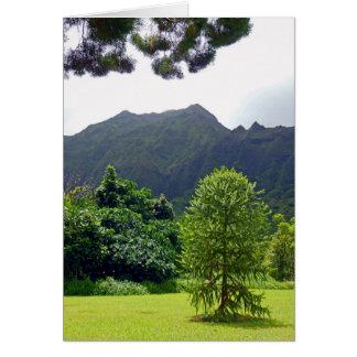 Parana Pine Card