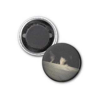 Paranoid Kitty or Ninja Cat? 1 Inch Round Magnet
