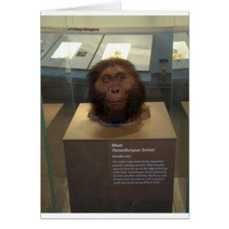 Paranthropus boisei; museum exhibit card