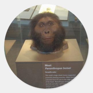 Paranthropus boisei; museum exhibit classic round sticker