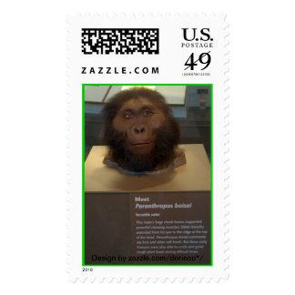 Paranthropus boisei; museum exhibit. stamps