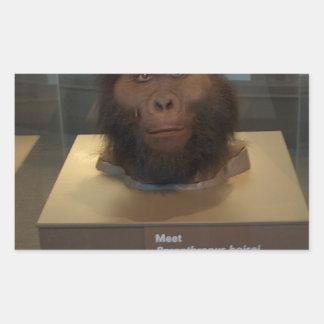 Paranthropus boisei; museum exhibit rectangular sticker