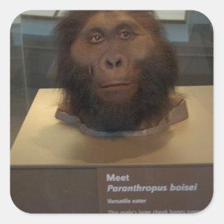 Paranthropus boisei; museum exhibit square sticker