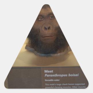Paranthropus boisei; museum exhibit triangle sticker