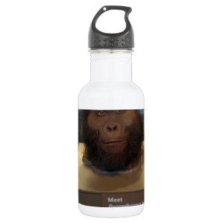 Paranthropus boisei; museum exhibit water bottle