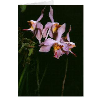 Paraphalaenopsis laycockii card