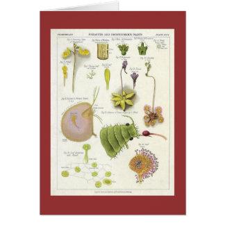 Parasitic & Carnivorous Plants Card