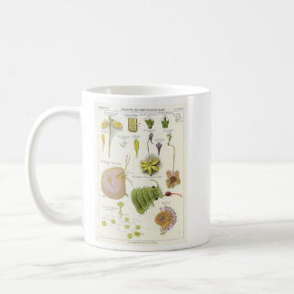 Parasitic & Carnivorous Plants Coffee Mug