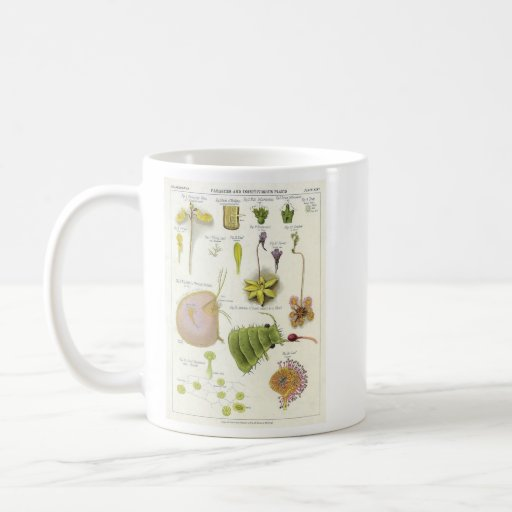 Parasitic & Carnivorous Plants Classic White Coffee Mug