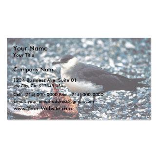 Parasitic Jaeger Business Card