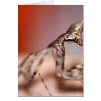 Parasphendale affinis nymph card