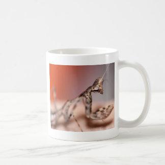 Parasphendale affinis nymph coffee mug