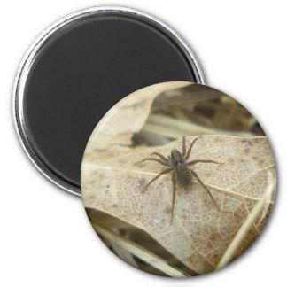 Pardosa on Oak Leaf Magnet