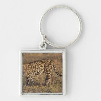 Pardus del Panthera del leopardo) con el cachorro, Llaveros Personalizados