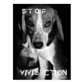 Pare la vivisección - postal