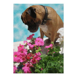 Pare y huela las flores poster
