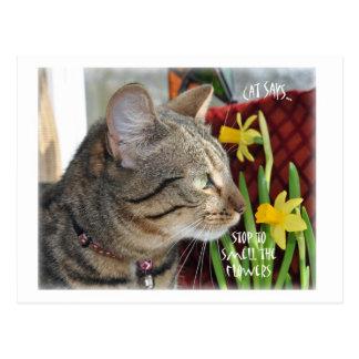 Pare y huela las flores postal