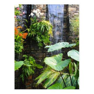 Pared de la orquídea tarjetas postales