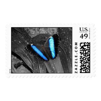Parellel Blues Stamp