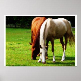 Pares Biracial del caballo Póster