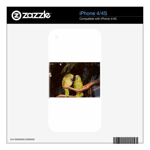 Pares bonitos del pájaro skin para el iPhone 4S