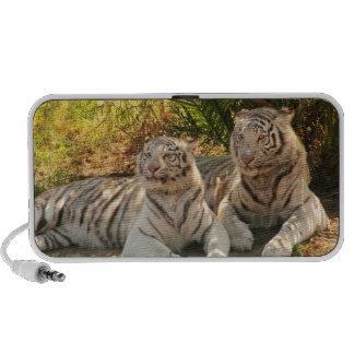 Pares de altavoces blancos de los tigres