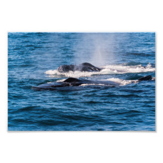 Pares de ballenas jorobadas fotografía