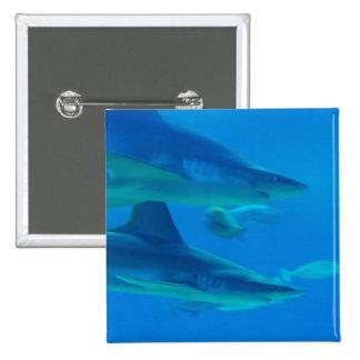 Pares de botón de los tiburones pin cuadrado