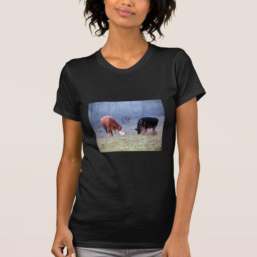Pares de Brown y de vaca negra que comen la hierba Playera