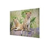 Pares de cachorros de león en la roca, Panthera le Impresiones En Lona Estiradas