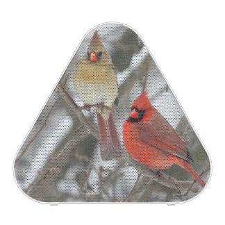 Pares de cardenales septentrionales altavoz bluetooth
