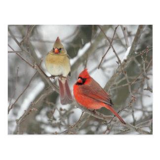 Pares de cardenales septentrionales postales