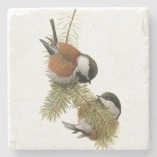 Pares de Chickadee Castaña-apoyado en árbol de Posavasos De Piedra