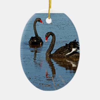 Pares de cisnes negros ornato