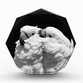 Pares de cockatoos del paraguas