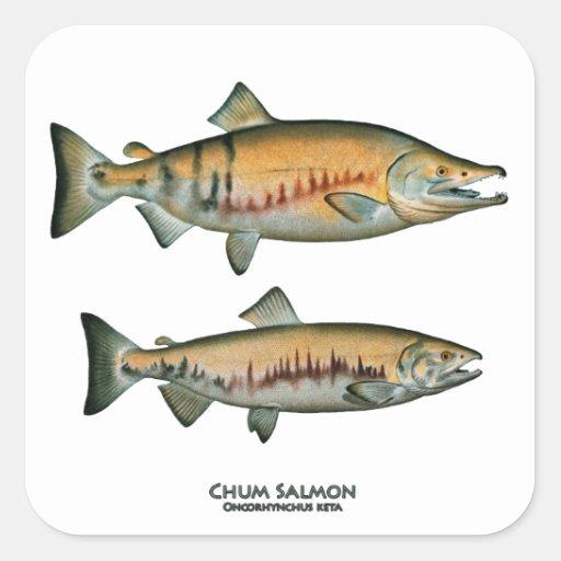 Pares de color salmón del amigo (que frezan fase) pegatina cuadrada