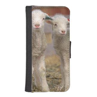 Pares de corderos comerciales de Targhee Billetera Para iPhone 5